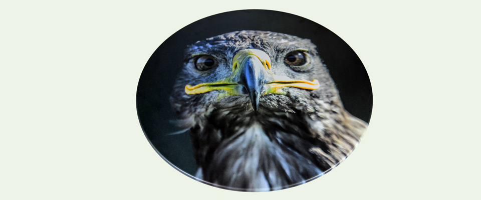 Greifvogel Usedom